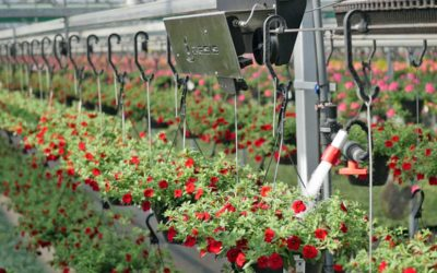 Innovative watering system: taking weight as starting point