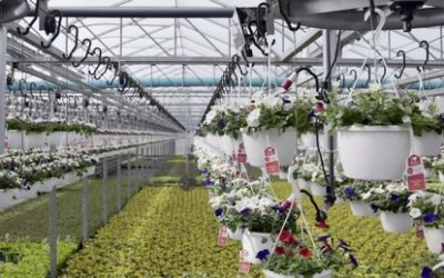 Water by weight for superior hanging baskets